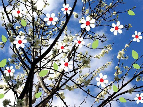 Printemps-fleur-blanche